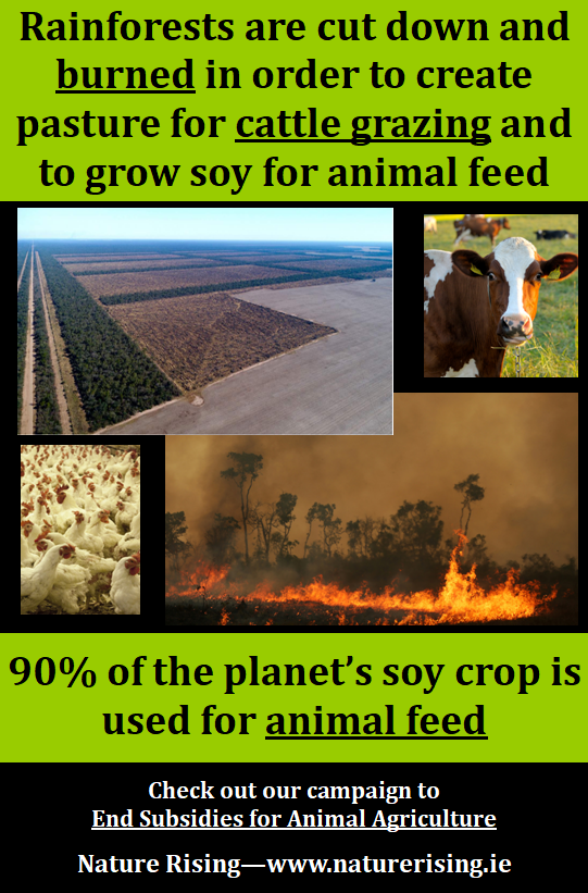 http://naturerising.ie/wp-content/uploads/2019/10/Soy.png