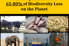 http://naturerising.ie/wp-content/uploads/2019/10/BiodiversityLoss.png