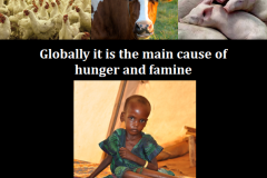 http://naturerising.ie/wp-content/uploads/2019/10/Famine.png