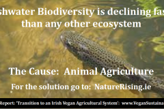 http://naturerising.ie/wp-content/uploads/2019/09/FreshwaterBio.png