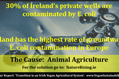 http://naturerising.ie/wp-content/uploads/2019/09/ecoli.png