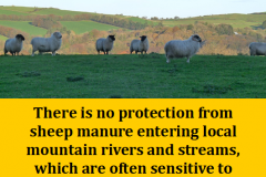 http://naturerising.ie/wp-content/uploads/2019/10/sheep.png